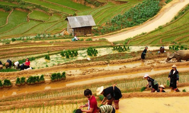 Top 6 Best Homestays & Ecolodges in Sapa 13