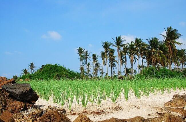 islands in vietnam 6