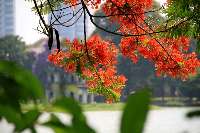 Best time to travel in Vietnam 9