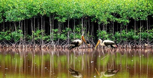 mekong delta 5
