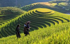 things to see and do in vietnam 7